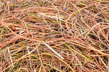sea weed: Full frame take of tangled sea weed stalks