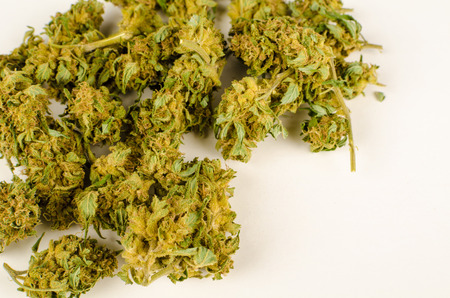 homegrown: Heap of homegrown cannabis buds  isolated on white Stock Photo