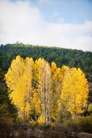 Autumn colors in Cuenca, Spain