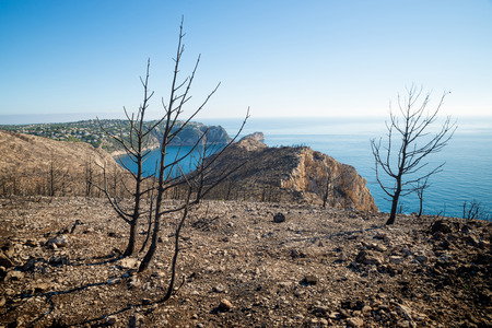 Aftermath of the devastating forest fire that destroyed a Mediterranean coastal pine tree forest Stock Photo