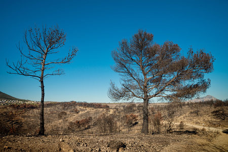 Burnt trees and desolation, aftermath of a severe forest fire