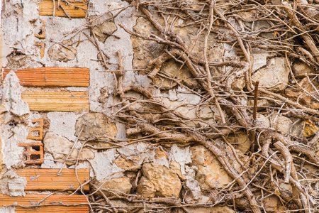 Old overgrown clay and brick wall