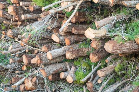 林業の木材の積み重ね