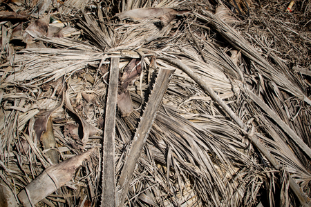 Heap of drying palm leaves after pruning