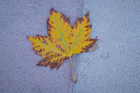 Fall leave on the pavement