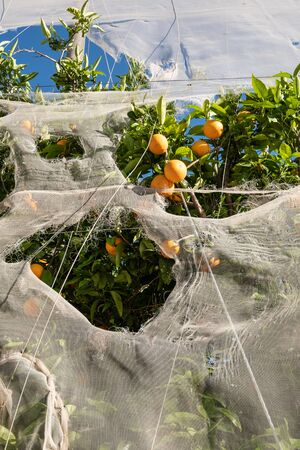 Heavy storm damage on a greenhouse in an orange plantation Imagens