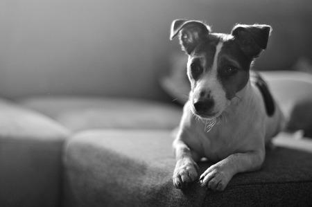 female dog: perra esperando