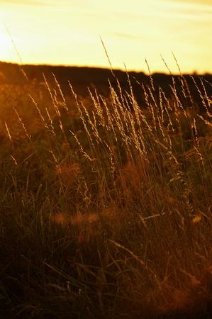 closeup: Sunset Stock Photo