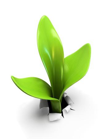 ホワイト バック グラウンド 3D レンダリングに分離された若い芽