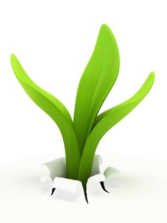 Jonge spruit op een witte achtergrond 3D rendering