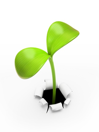 sprout growth: young green sprout
