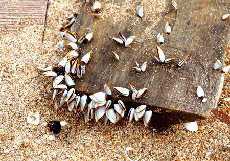 plancton: El plancton se encontr� en la madera vieja en la playa de Tailandia. Foto de archivo