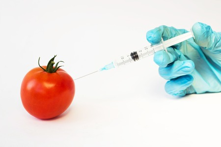 In a tomato on a white background from a syringe hand in a blue glove prick substance nitrates, geneticaly, close up