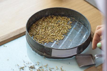 Labor für die Inspektion und Analyse von Getreide, auf dem Tisch liegt ein Sieb und Getreide