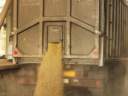 A truck unloads grain at a grain storage and processing plant, a grain storage facility, unloading seed, plant, production