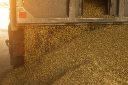 A truck unloads grain at a grain storage and processing plant, a grain storage facility, grain Banque d'images