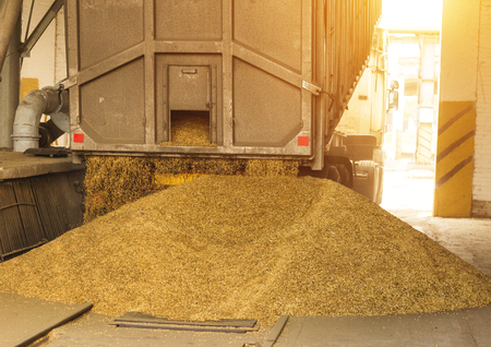 A truck unloads grain at a grain storage and processing plant, a grain storage facility, working