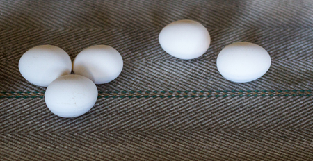 The production of chicken eggs, poultry, chicken eggs go through the conveyor for further sorting, close-up, transporter, farm, feeding