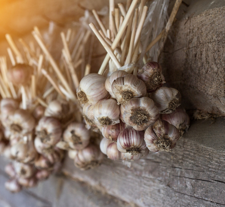 Garlic bundles hanging on wooden background, garlic bundles close-up, sun, agriculture