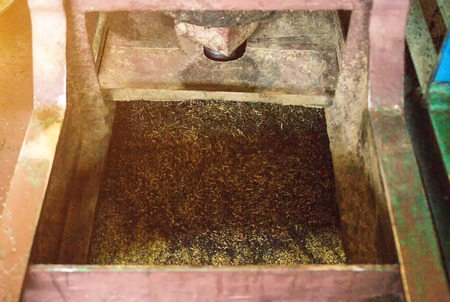 Production for the processing of rapeseed oilseeds and the production of rapeseed oil, the work of the roaster, the shafts of the roaster stir the crushed rape, biodiesel production
