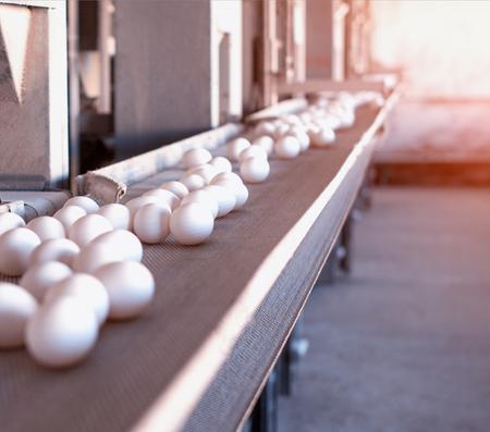 Multi-level conveyor belt with chicken eggs on a chicken farm, sun, copy space, conveyer, Assembly line, sunset Foto de archivo