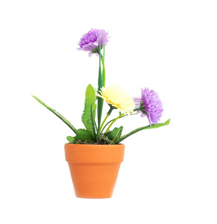 A pot with artificial flowers of purple and yellow chrysanthemums on a white background, isolate, beautiful