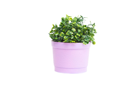 Green decorative grass growing in a small pot on a white background. Isolate, botanical