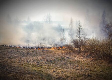 Dry scorched grass burns in the forest, fire