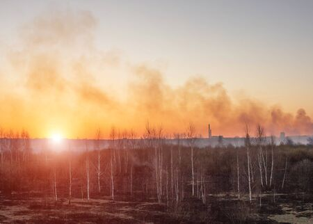 Dry grass and forest burns against the backdrop of a sunny sunset and the city, a lot of smoke, background, outdoor