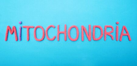 inscription mitochondria with red plasticine on a blue background, organella