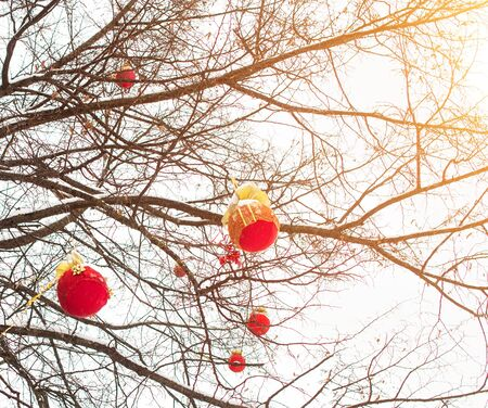 Decorated Christmas tree with red balls on the eve of the holiday. Background, copy space, celebratory
