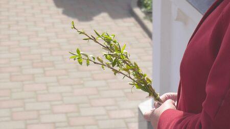 Femme tenant des brindilles de saule pour la fête de l'église chrétienne le dimanche des Rameaux, espace de copie, traditionnel Banque d'images