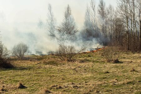 Dry grass burning in the spring forest, fire. Increased fire hazard in nature, a lot of smoke, background