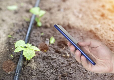 A man s hand holds a phone, in the background of a garden with plants and modern smart watering. The concept of electronic smart watering system for time management from the phone, cucumbers 스톡 콘텐츠