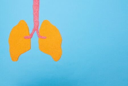 Human lungs on a blue background. Human lung transplant concept, diseases, pneumonia, lung cancer, copy space