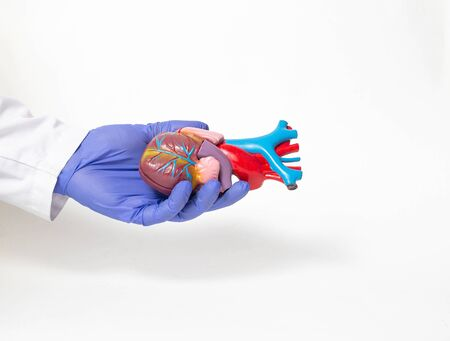Doctor holds a mock heart organ in his hand on a white background. Heart transplant and surgery concept, shunting, Heterotopic transplant