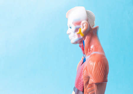 Man mannequin on a blue background. The concept of the study of human diseases and their treatment with a medical dummy