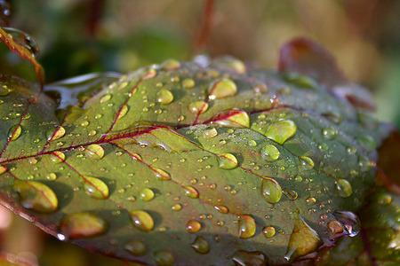 morning dew: morning dew at sunrise