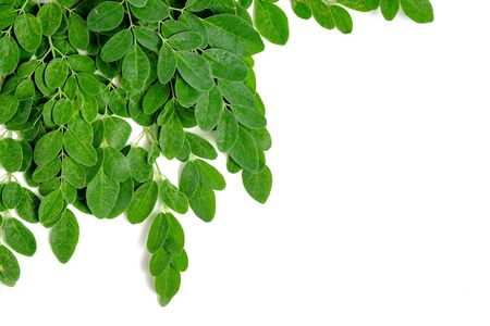 Moringa or Malunggay leaves on white isolated color background Stock Photo - 134180326