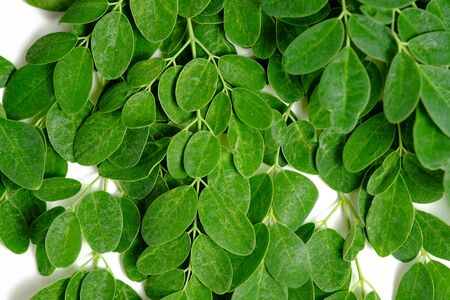 Moringa or Malunggay leaves on white isolated color background Stock fotó