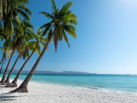 Beautiful Boracay tropical island beach with palm tree and tranquil blue water on clear day sky