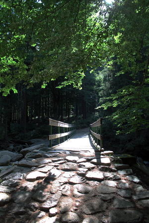 stone path: Wooden bridge with stone path in the morning