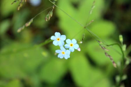 petites fleurs: Petites fleurs sur une colline