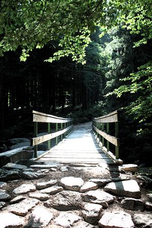 artictic: Artistic Fresco Forrest Path Background