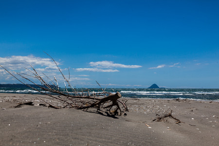 plenty: dead branch in front of a volcano on the bay of plenty in new zealand Stock Photo