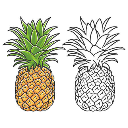 Summer fruits for healthy lifestyle. Pineapple fruit