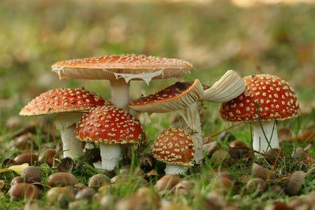Grupo de ToadStooL Foto de archivo - 3695039