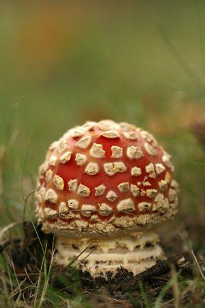 Little toadstool Stock Photo - 3695038