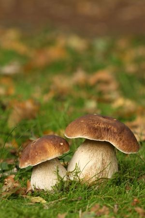 Two brown and white colored mushrooms photo