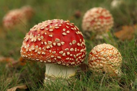 Two toadstools photo